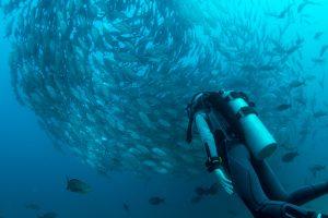 diving vancouver british columbia bc canada